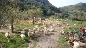 Agrotourismus, Mallorca, Kinder, Urlaub, Ferien, Finca, Tiere