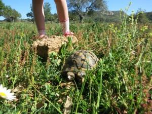 Agrotourismus, Mallorca, Kinder, Urlaub, Ferien, Finca, Tiere, Schwimmbad, Reiten, Esel, Eselkarre, Bauer, Bauernhof